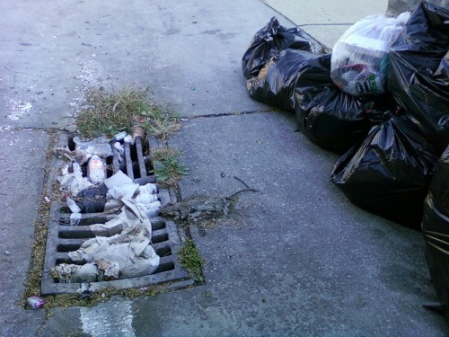trash_decaying rat