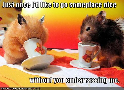 funny hamster picture