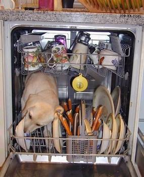 A dog in a dishwasher. This is not how to properly load a dishwasher.